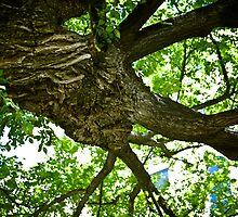 Eternal Tree by Sharlene Rens