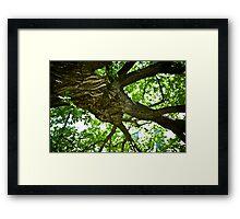 Eternal Tree Framed Print