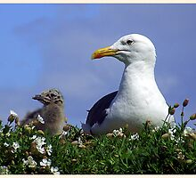 Herring Gull and Chick by GillBell