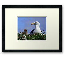 Herring Gull and Chick Framed Print