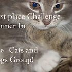 Cats and Dogs group banner by loiteke