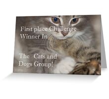 Cats and Dogs group banner Greeting Card