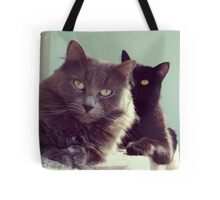 cats grey and black / photo Tote Bag