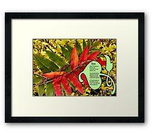 Leaves and More Leaves,  Framed Print