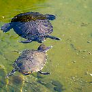 Turtle Conversation - Hong Kong Park by Richie Wessen