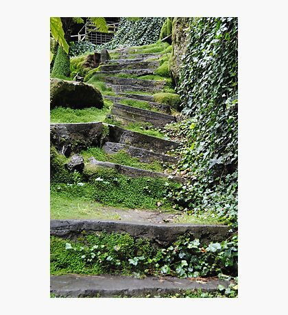 200yr old stone steps - Umpherston Sinkhole - Mt Gambier, South Australia Photographic Print
