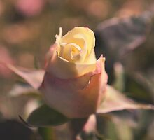 A rose by any other name by Bree Waltman
