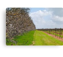 The Vineyard - Naracoorte, South Australia Canvas Print