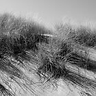 Coastal Grass by Paul Berry