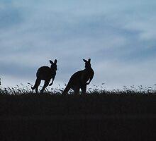 Kangaroos moving through the sunset - Whittlesea, Victoria by Heather Samsa