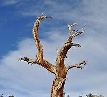 Lone tree hill by Bree Waltman