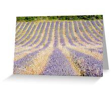 Lavender Row Greeting Card