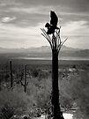 Raptor on Saguaro ~ Black & White by Lucinda Walter