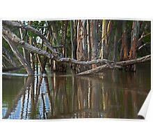 Flooding at Railway Creek Poster