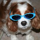 Too Cool For Words- Cavalier King Charles Spaniel by daphsam