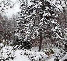 Winter Storm by pequot99