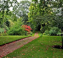 Buckingham Palace Gardens, England by Cindy Ritchie