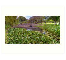 Warrnambool Botanic Gardens Art Print