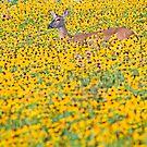 Deer in a Field of Wildflowers by Oscar Gutierrez