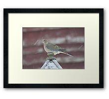 Snowy Dove Framed Print