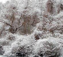 The Forest Hush by Lynda Lehmann