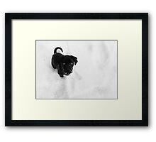 Cinder in the Snow Framed Print