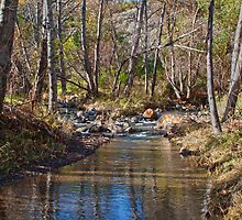 Los Padres Forest Stream by Renee D. Miranda