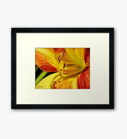 Lilium Macro Framed Print