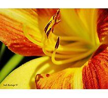Lilium Macro Photographic Print