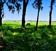 Paynes Prairie Mustang by designerbecky