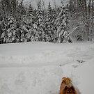 'Too Much Snow for Cindy!' by Scott Bricker