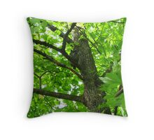 Great Horned Owl in a Cottonwood Tree Throw Pillow