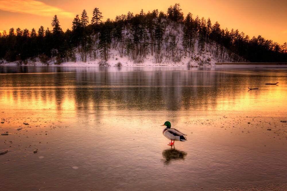 Cold Duck by Bob Larson