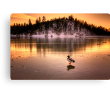 Cold Duck Canvas Print