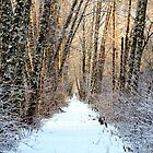 Winter Trail by Bob Shupe