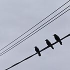 3 blackbirds by Jessica Melanson