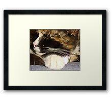 Sprinkles Whiskers Framed Print