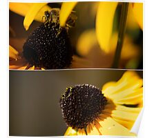 Black Eyes and Bees Diptych Poster