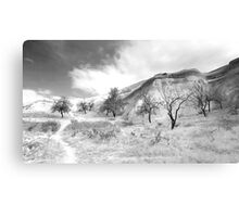 Ten Trees and a Path Canvas Print
