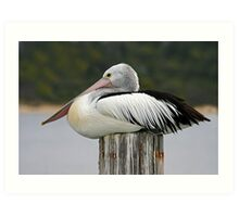 arResting Pelican - Lakes Entrance, East Gippsland, Victoria Art Print