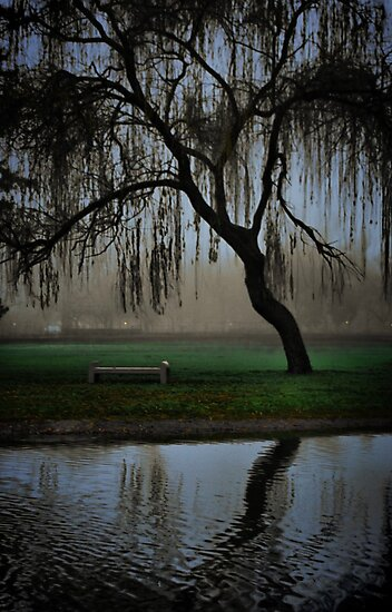 Hanging in the fog by Barbara  Brown