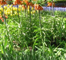 Tulips and Crown Imperials - Keukenhof Gardens Sticker