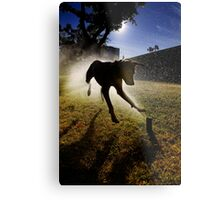 Dogs with game face on .20 Metal Print