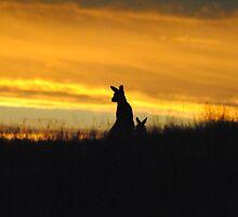 Kangaroos in an orange Sunset - Whittlesea, Victoria by Heather Samsa