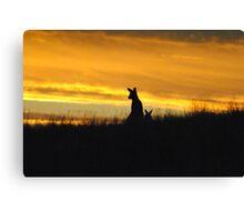 Kangaroos in an orange Sunset - Whittlesea, Victoria Canvas Print