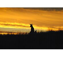 Kangaroos in an orange Sunset - Whittlesea, Victoria Photographic Print