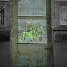 The Green Door That Drew Me In  by Jen Waltmon