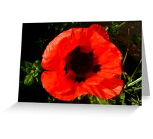 Cusp Cuspschen's 'poppy' Greeting Card