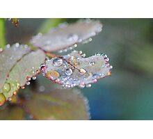 Rose petal raindrops Photographic Print