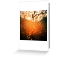 Improbable transformation Greeting Card